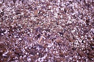 Pre-emergent Fertilizers